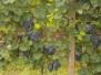 Mopeďáci na moravě 9/2013
